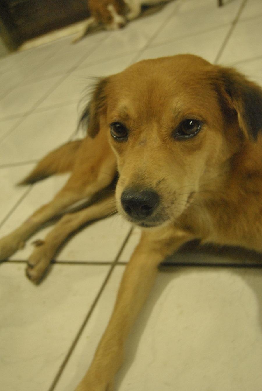 Anjing Armeyncom